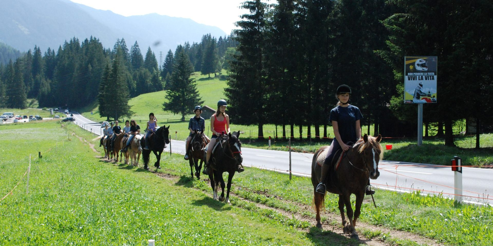 Horse Ranch Highland Cattle