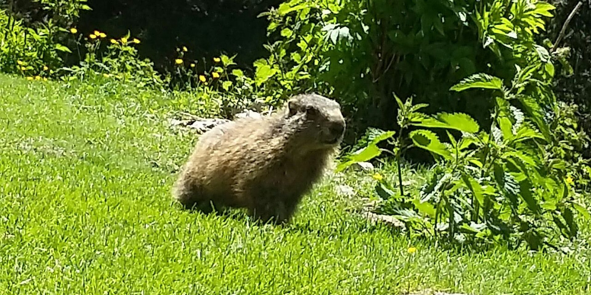 The trail of marmots