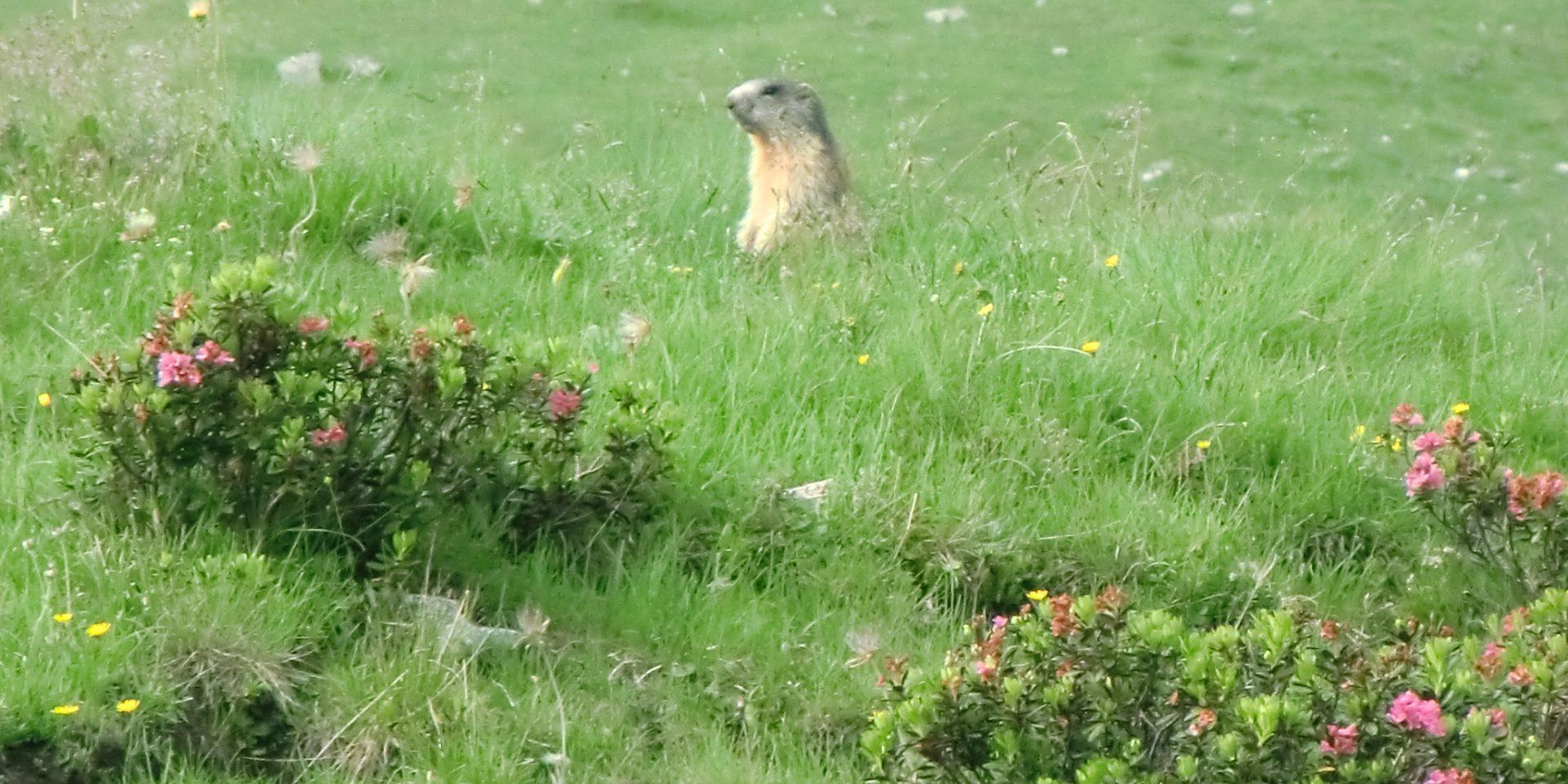 La città delle marmotte